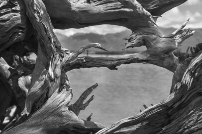 photography is art, fine art photography, limited edition prints, landscape, photography, landscape Western Cape, black and white photography, windows, aperture, dead trees, water, river,